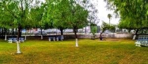 nuevas zonas de estudio y reposo césped y árboles